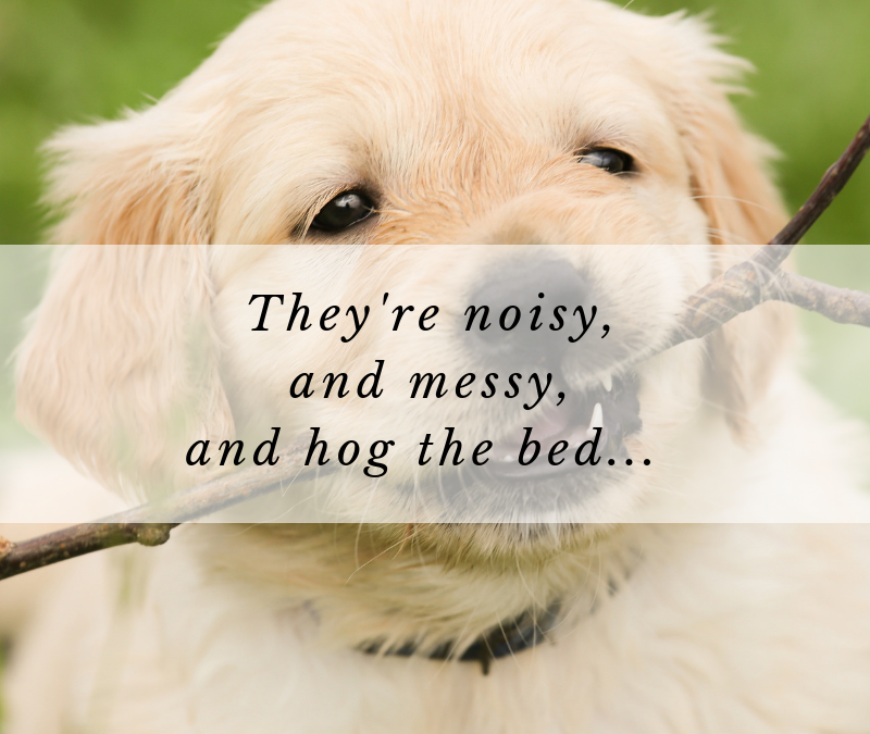 They're noisy and messy and hog the bed